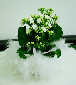 Biała dekoracja kwiatów doniczkowych