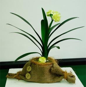 Dekoracja w doniczce kwiatów zielonych