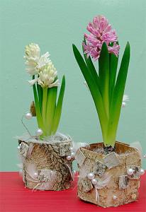 Hiacynty w doniczkach z perłami