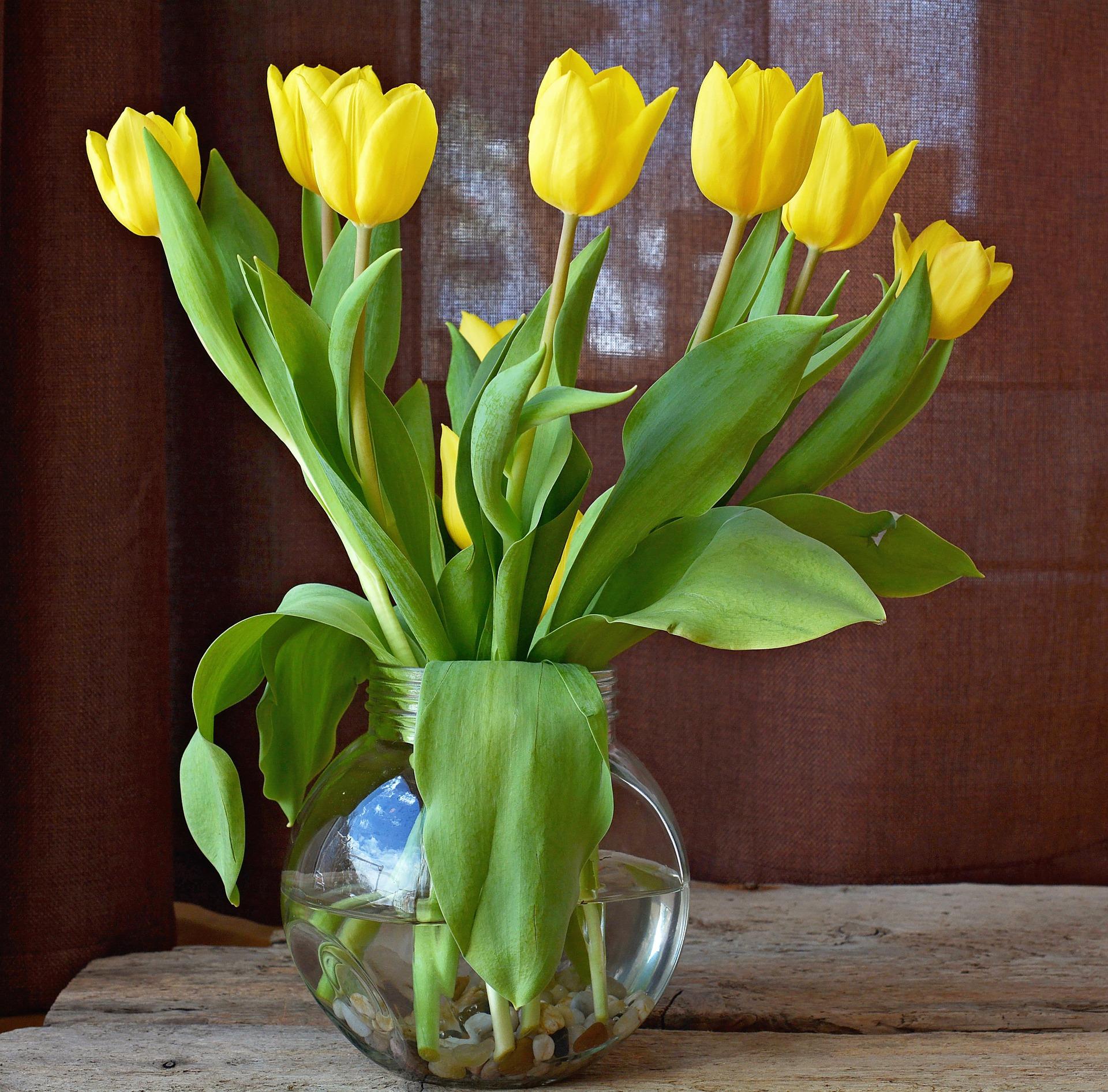 Kwiaty Ciete Co Zrobic Zeby Byly Dluzej Piekne