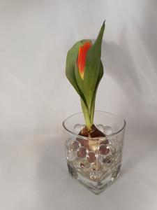 tulipany-w-hydrożelu (4)