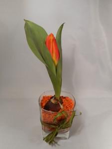 tulipany-w-hydrożelu (7)