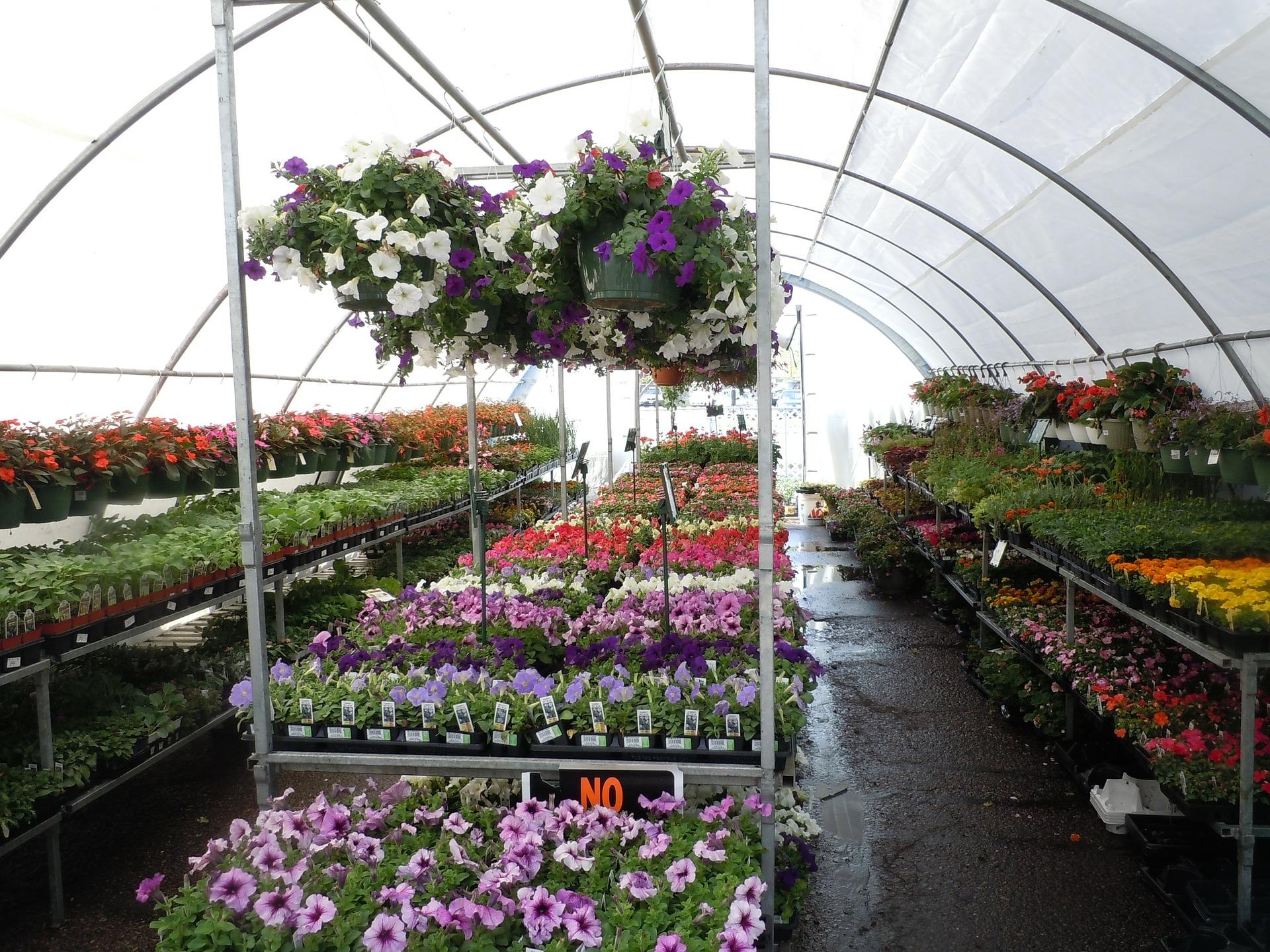 świeżość kwiatów - szklarnia