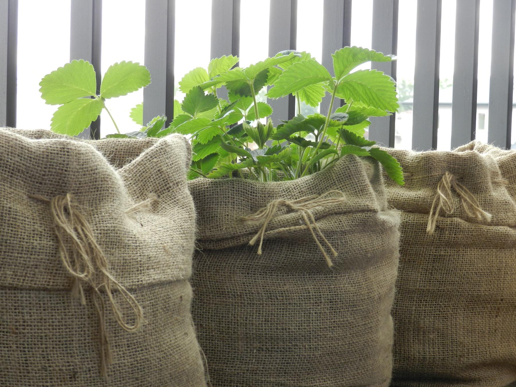 donice jutowe - rośliny