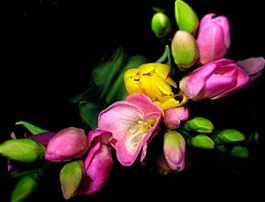 ikebana - różowe kwiaty