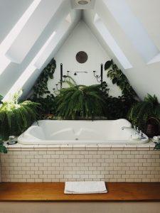 Roślina Do łazienki Atrakcyjna Dekoracja I Wystrój Przestrzeni