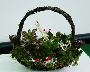 Dekoracja florystyczna w koszu maranta na mchu