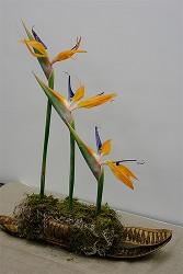 Kompozycja kwiatowa w naczyniu z mchem