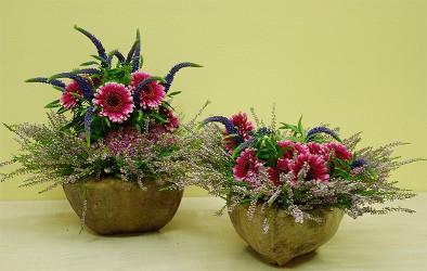 Różowe gerbery w drewnianych naczyniach