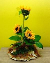 Słoneczniki w naczyniu