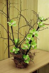 Zielone kwiaty w naczyniu