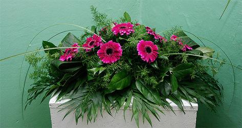 Różowe gerbery na trumnę